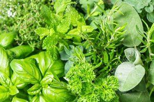 hierbas y verduras frescas